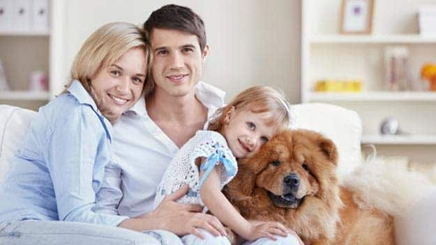 Wills & Trusts dog-young-family Direct Wills Scotland